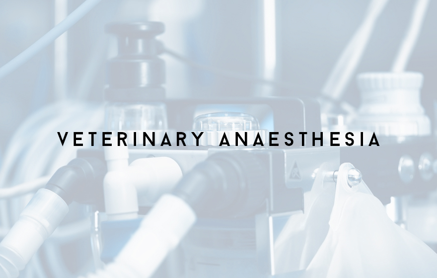 Course Image Principles of supporting veterinary anaesthesia