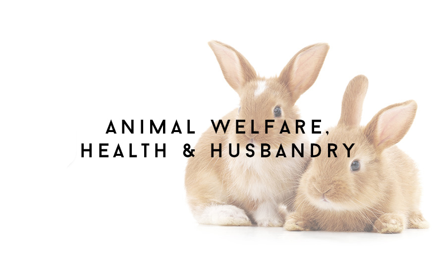 Course Image Applied animal welfare, health and husbandry for veterinary nurses