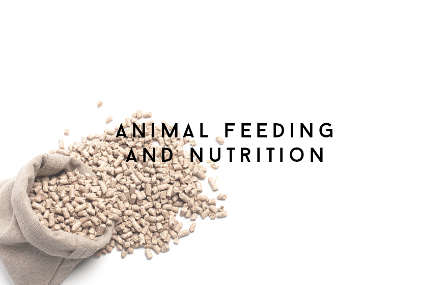 Course Image Animal feeding and nutrition
