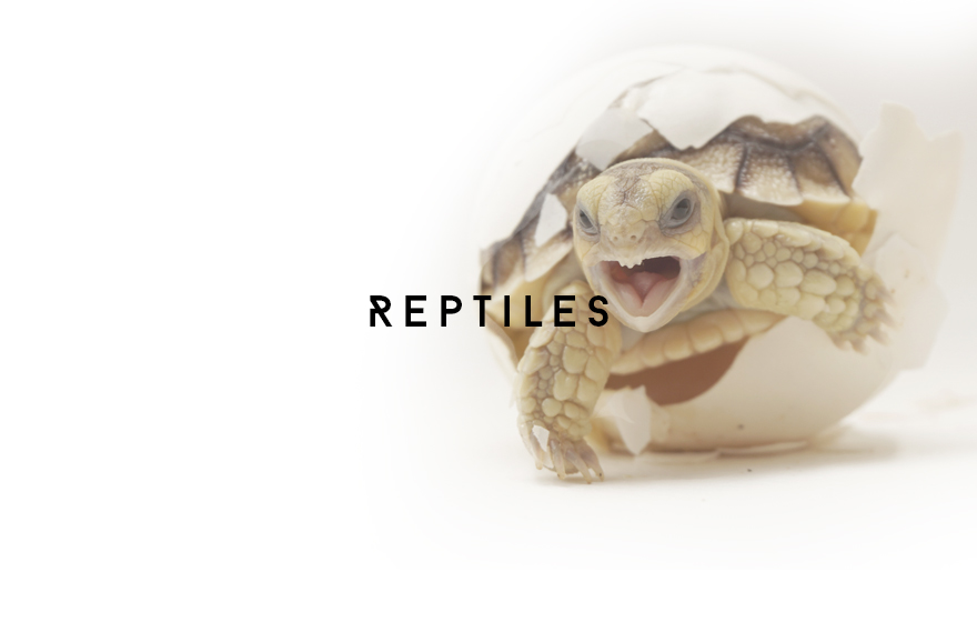 Course Image Reptiles by Vetlogic Video