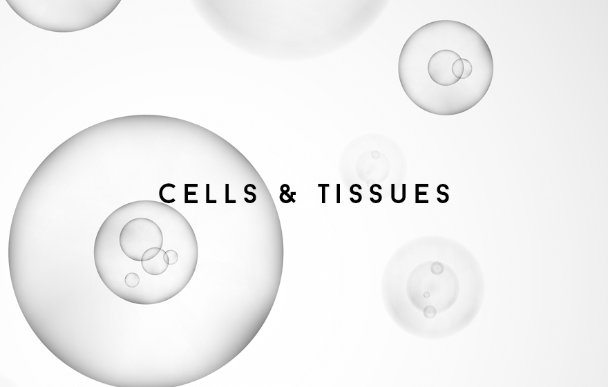 Course Image Cells and Tissues