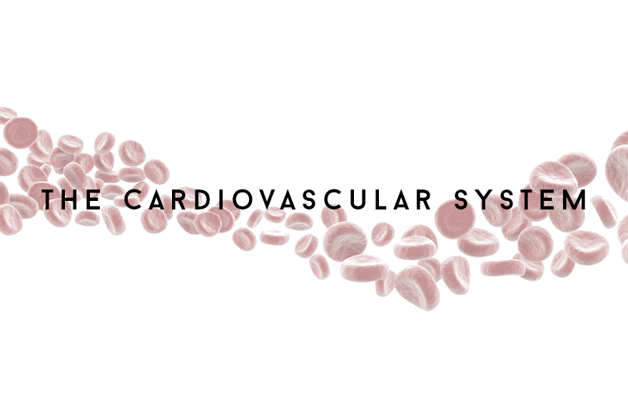 Course Image The Cardiovascular system