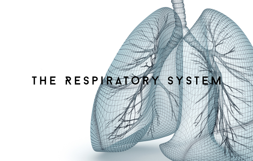 Course Image The Respiratory system