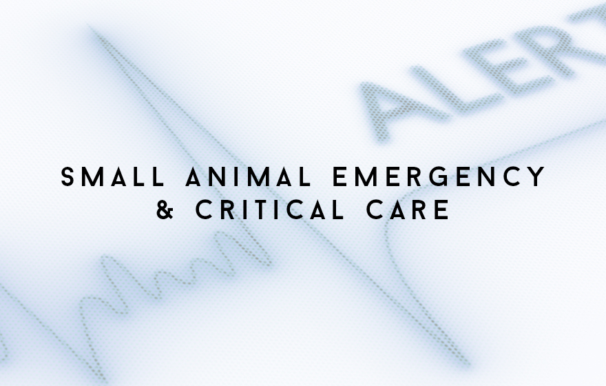 Course Image Principles of small animal veterinary nursing emergency and critical care